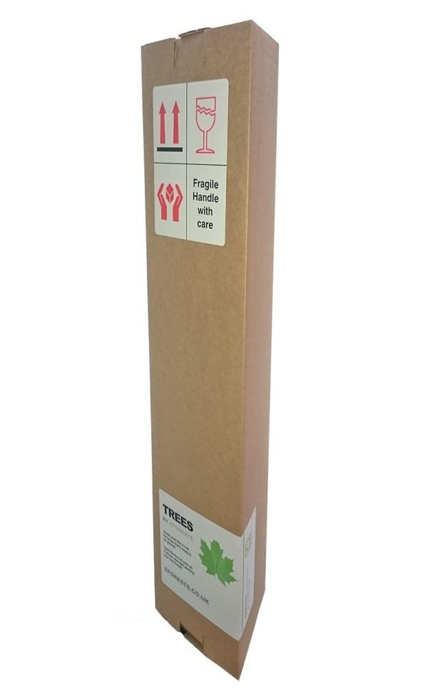 Tree Gifts - Our tree gifts are packaged in sturdy, recycled cardboard boxes