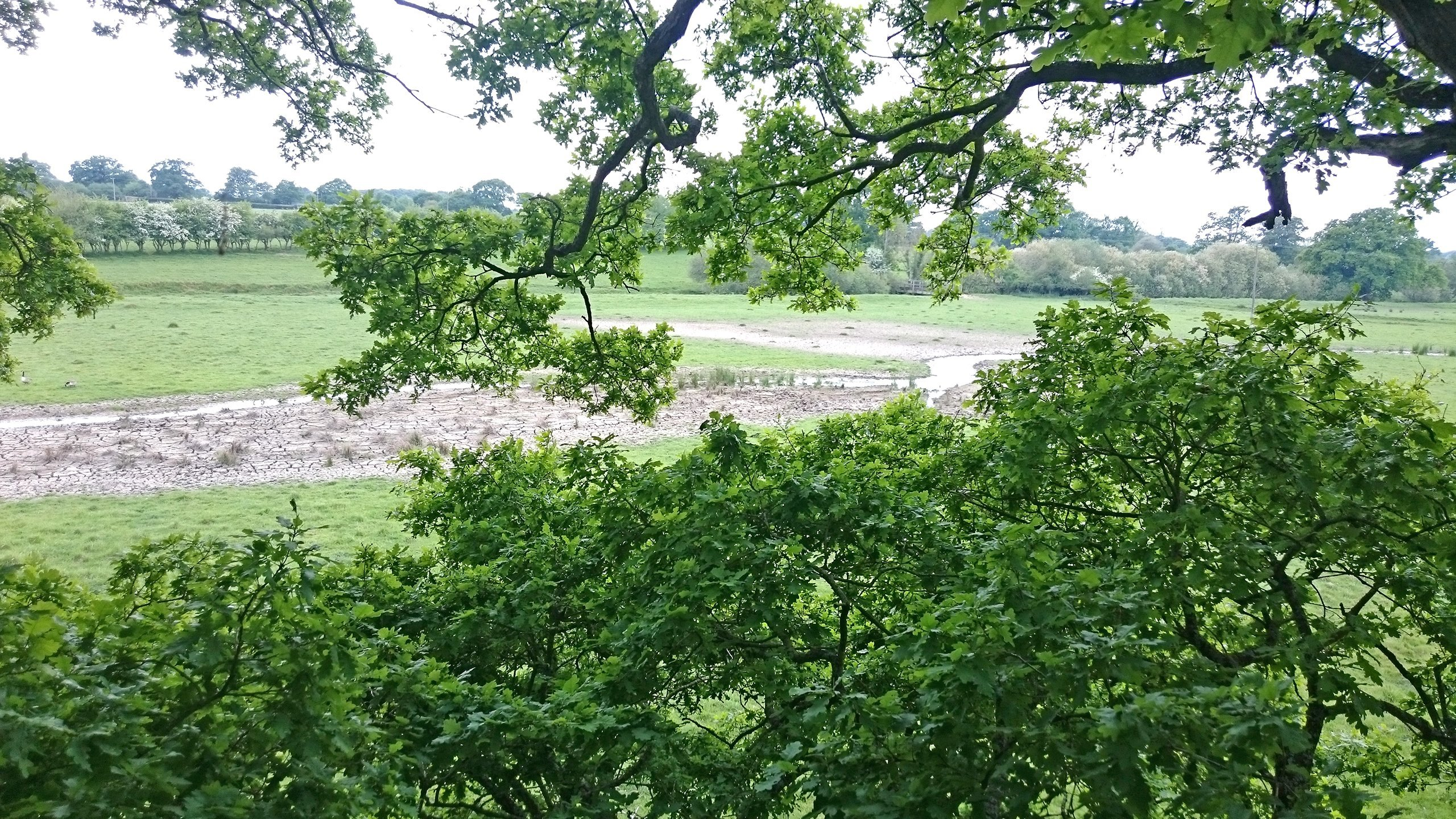 Knepp Wildland - River viewed from a platfrom in the oak tree canopy