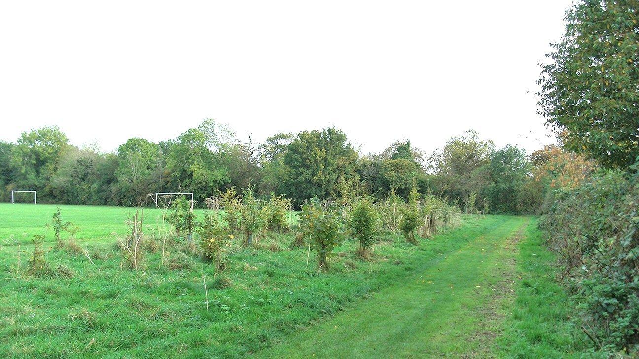 Badocks Wood  -  Tree Planting  -  Oct 2014
