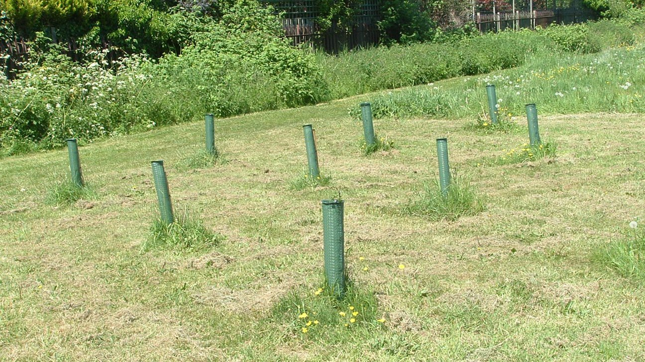 Badocks Wood  -  Tree Planting  -  Sept 2010