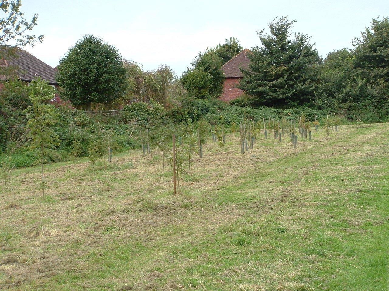 Badocks Wood  -  Tree Planting  -  Sept 2012
