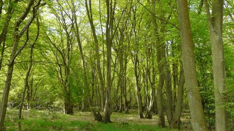 Balls Wood  -  Tree Planting In Hertfordshire
