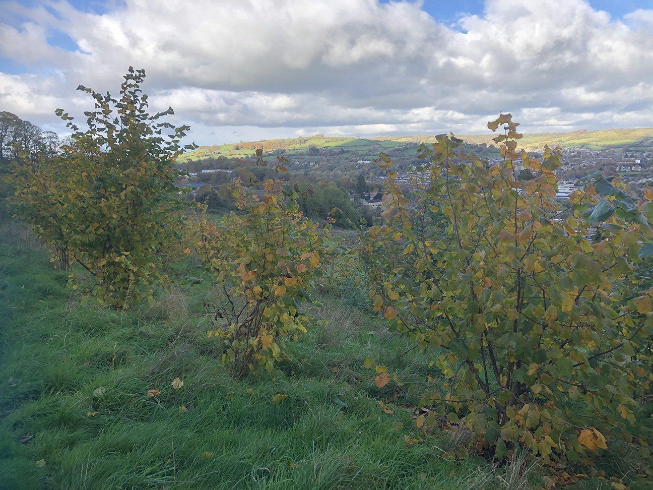 Bath City Farm  -  Somerset  -  Trees And View Towards Bath