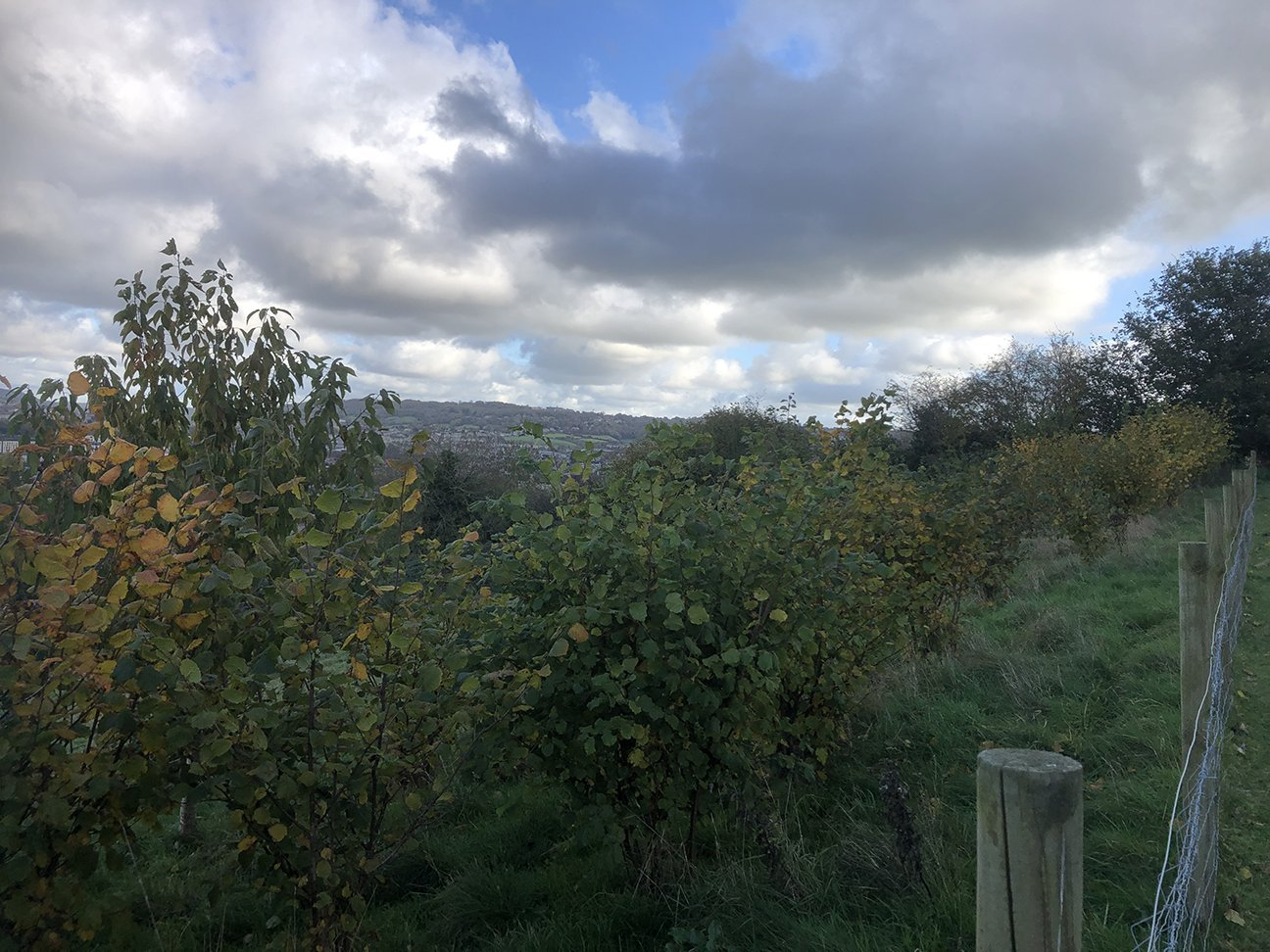 Bath City Farm  -  Somerset  -  Trees In Autumn
