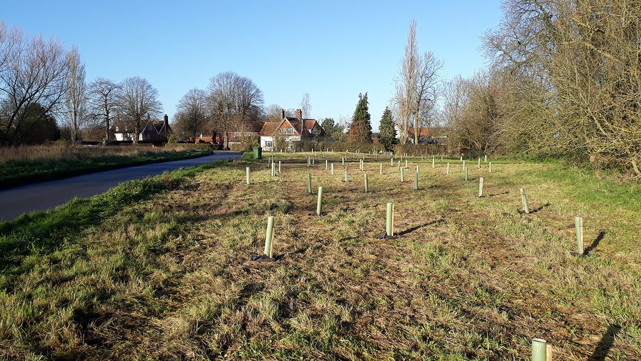 Brewers Green  -  Norfolk  -  Trees In Shelters
