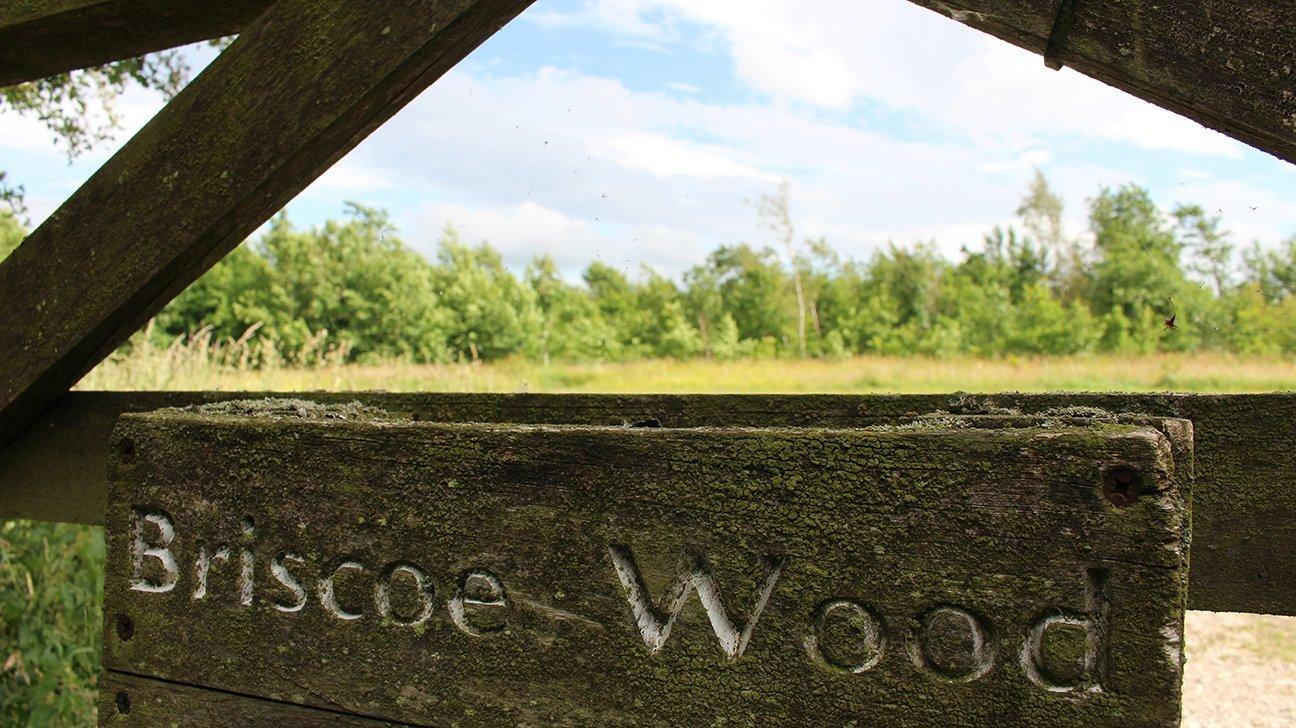 Briscoe Wood  -  Yorkshire  -  Entrance