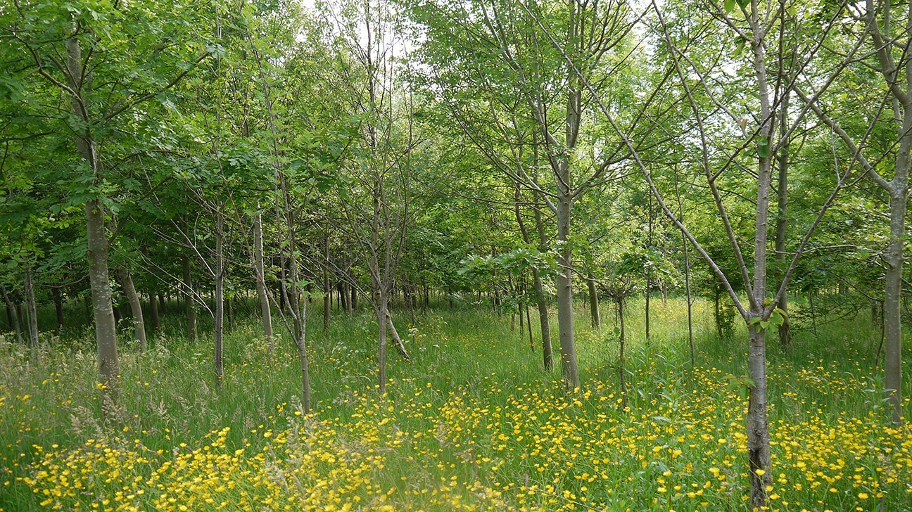 Briscoe Wood  -  Yorkshire  -  Mature Trees And Flowers
