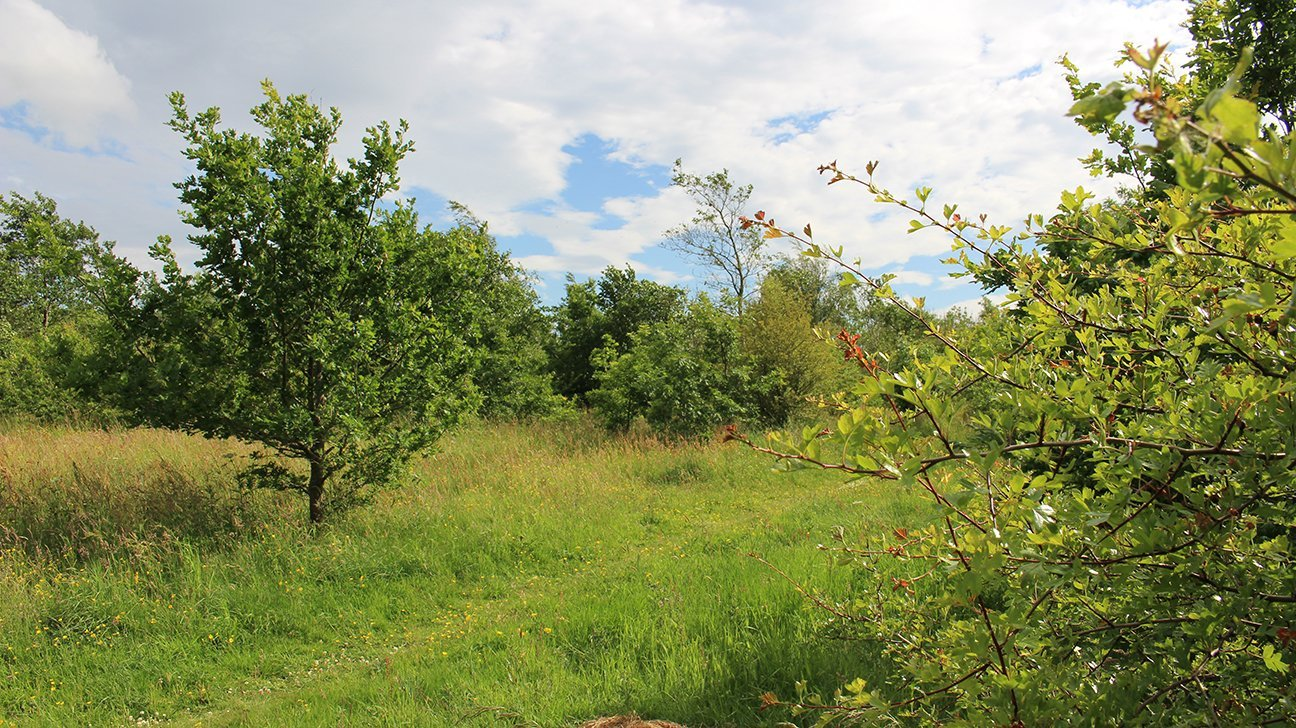 Briscoe Wood  -  Yorkshire  -  Mature Trees