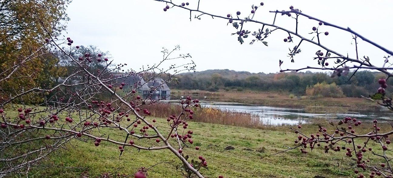 Brockholes Nature Reserve  -  Lancashire  -  Floating Visitor Centre