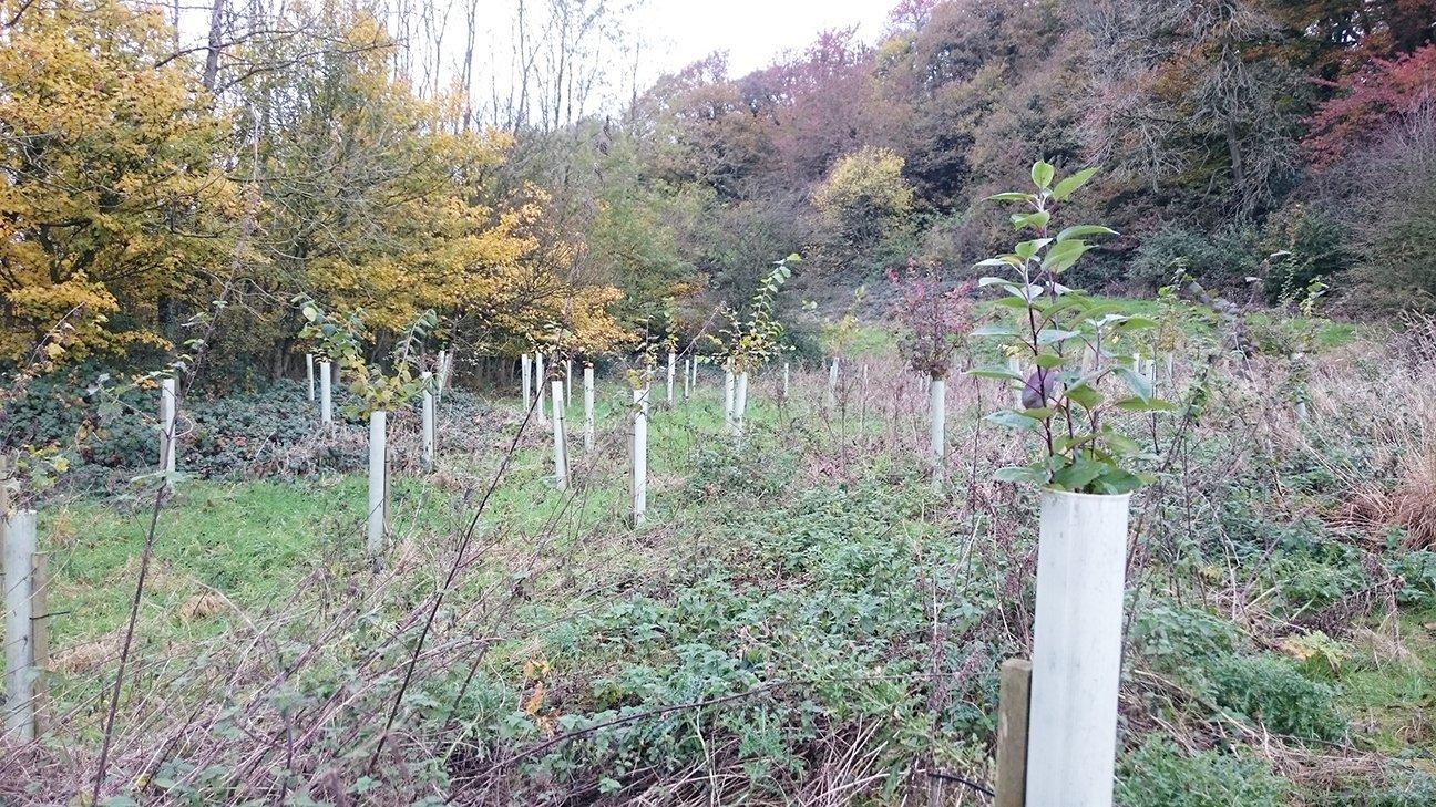 Brockholes Nature Reserve  -  Lancashire  -  Trees In Shelters Near Boilton Wood