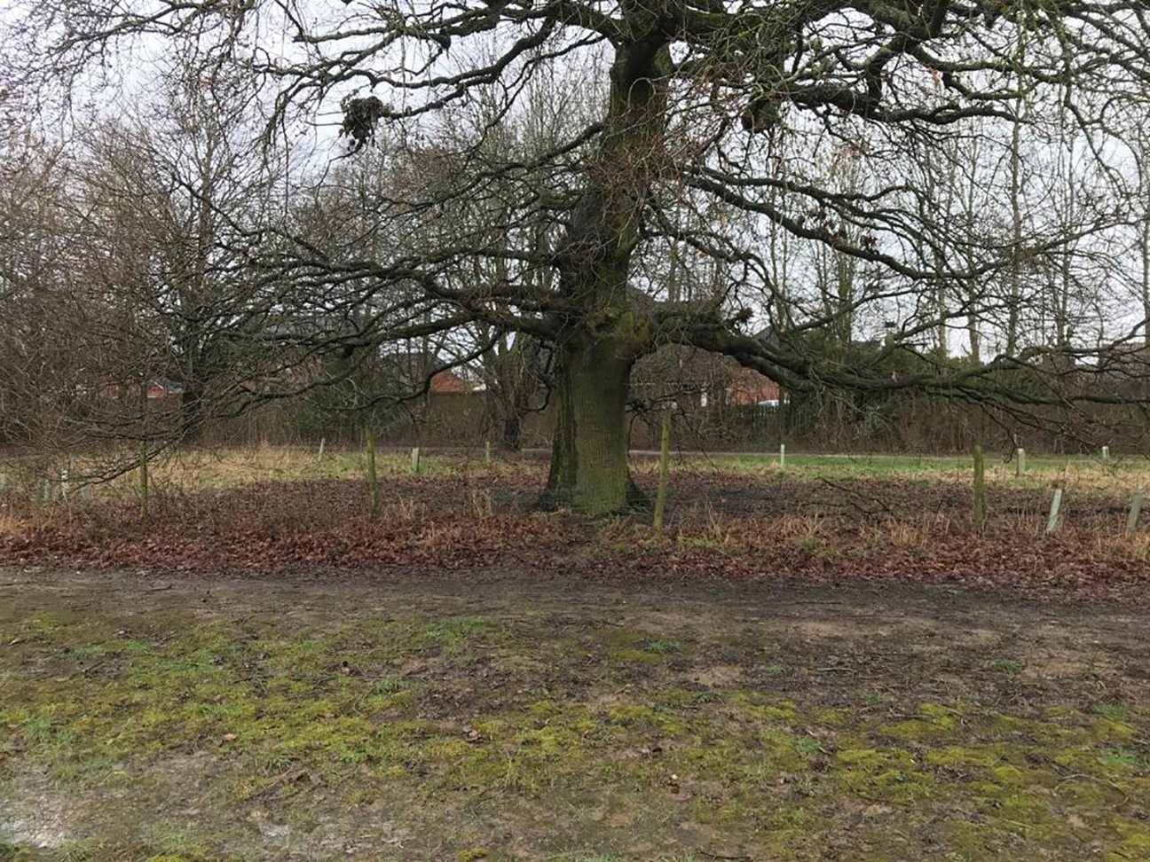 Chaddesden Wood  -  Derby  -  Lime Green Planting Zone 2021