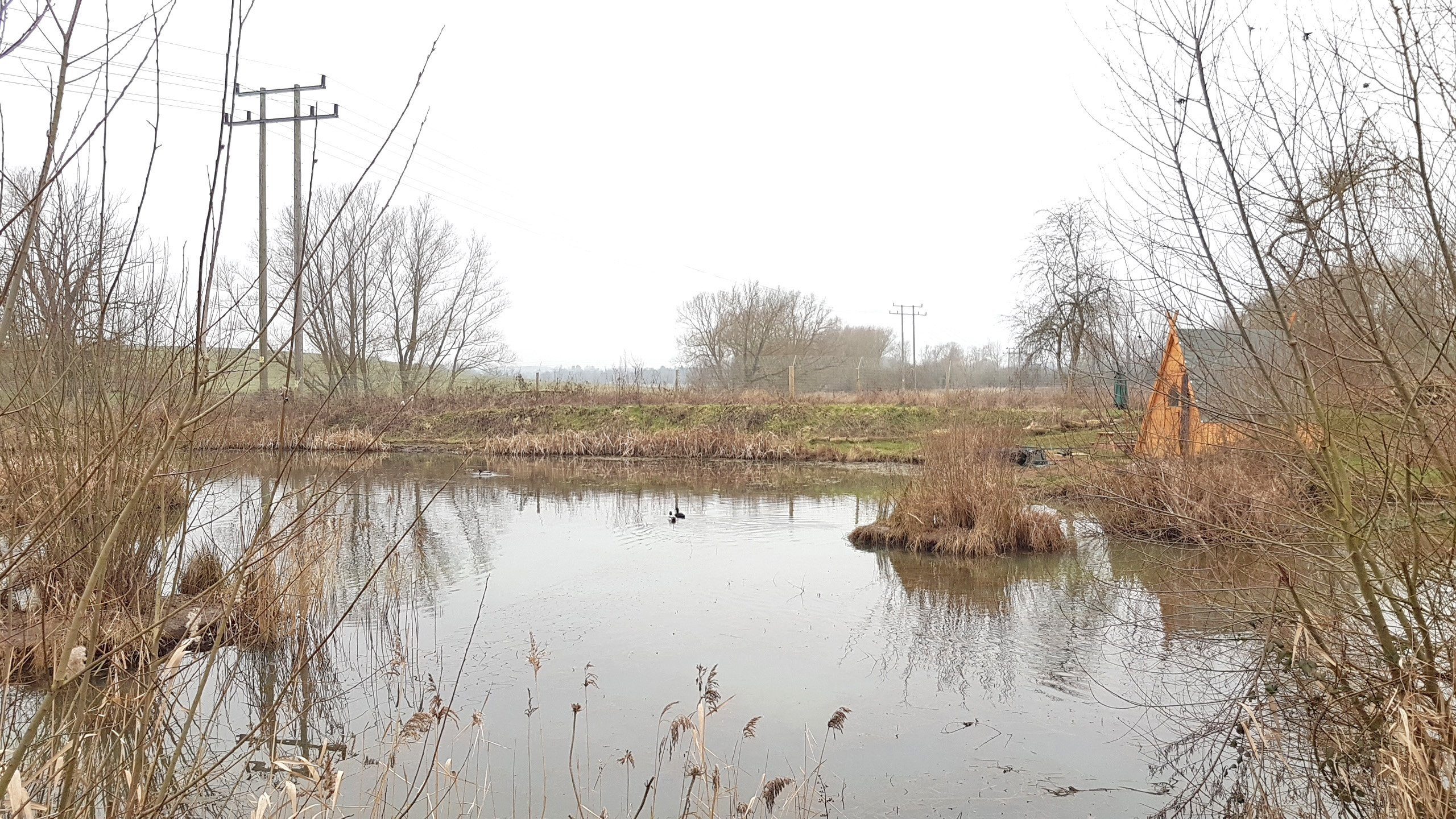 Clare Fisheries County Wild Life Site  -  Suffolk