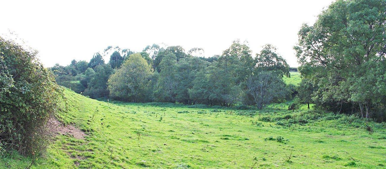 Hems Down  -  Devon  -  Before Tree Planting 2020