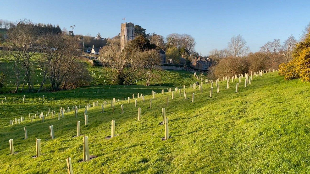 Hems Down  -  Devon  -  Newly Planted Trees  -  APR 2021