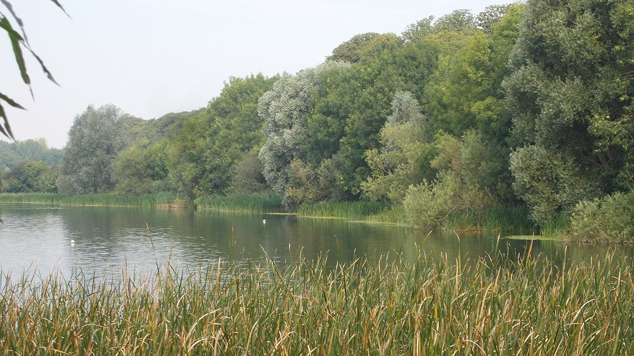 Hinchingbrooke Country Park  -  Cambridgeshire  -  Mature Trees By The Lakeside
