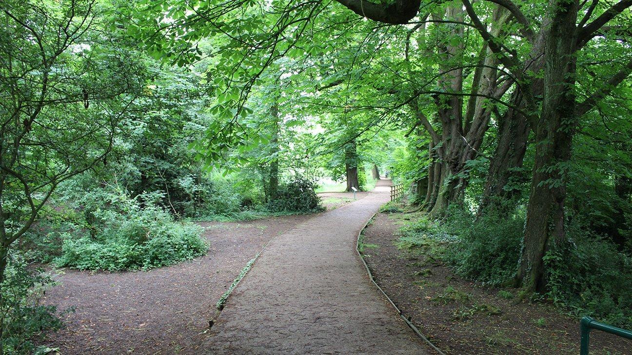 Hinchingbrooke Country Park  -  Cambridgeshire  -  Has Many Tree Lined Pathways
