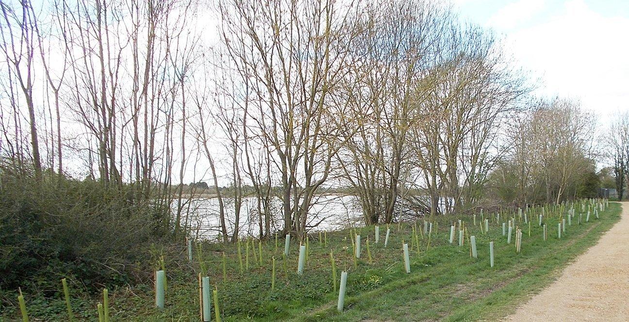 Hinchingbrooke Country Park  -  Cambridgeshire  -  Newly Planted Trees 2021
