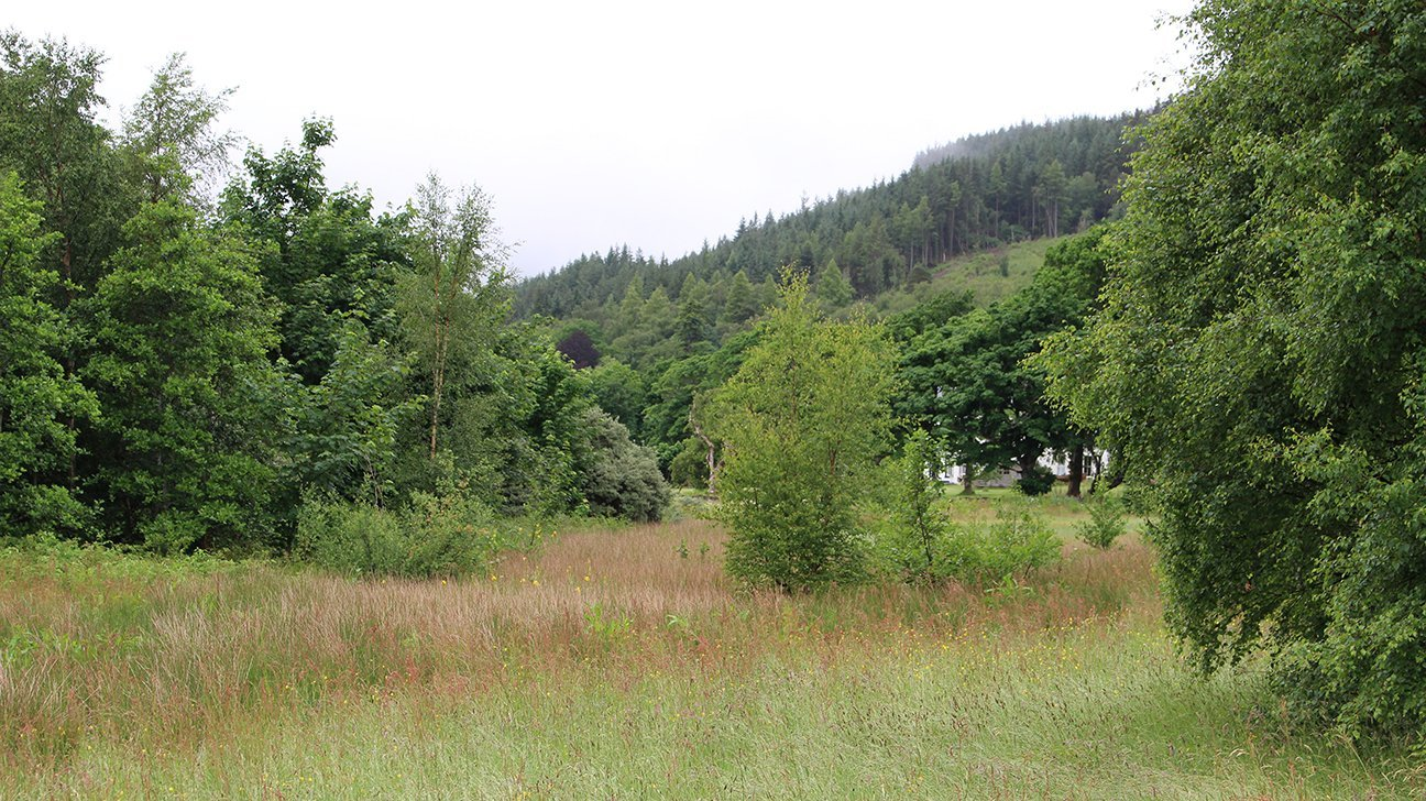 Knoydart  -  Scottish Highlands  -  The Trees Planted On Long Beach In 2008 Are Thriving  -  JUNE 2021