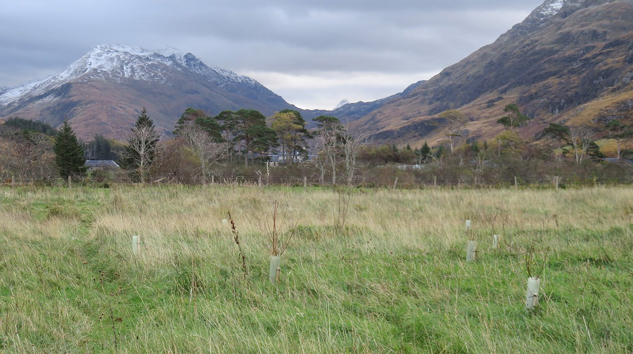 Knoydart  -  Scottish Highlands  -  Trees In Shelters And Snow Capped Mountains