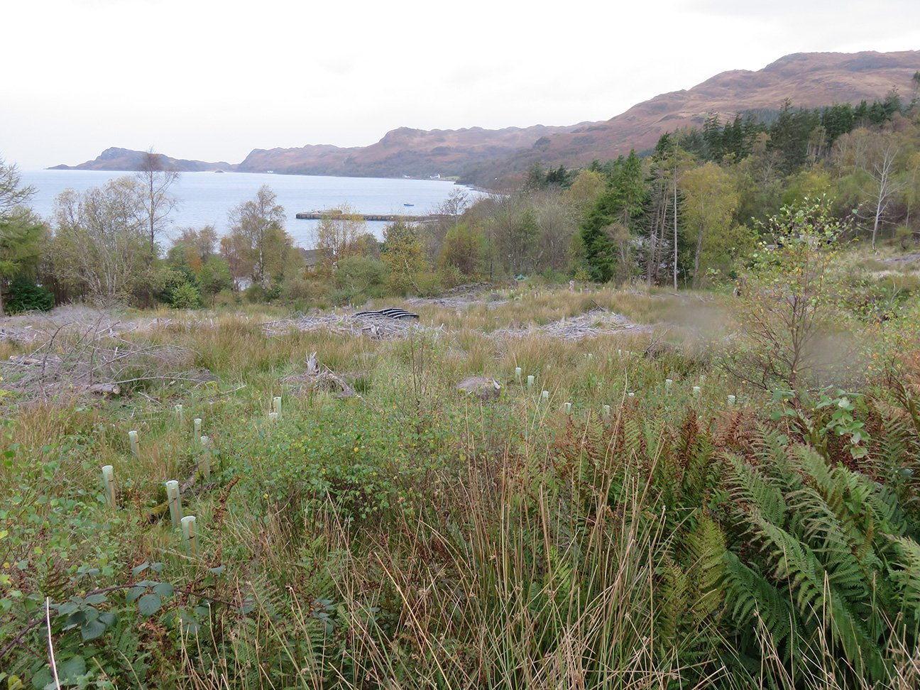 Knoydart  -  Scottish Highlands  -  Trees In Shelters Near The Ferry Landing