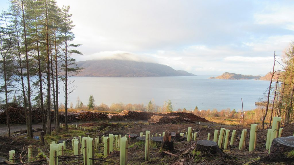 Knoydart  -  Scottish Highlands  -  Trees In Shelters On The Hill Overlooking The Water