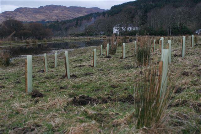 Knoydart  -  Scottish Highlands  -  Trees In Shelters Planted On Long Beach 2008