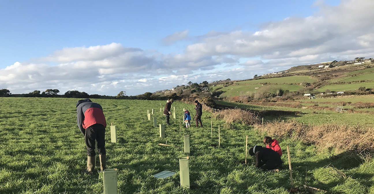 Lisas Wood  -  Cornwall  -  Planting New Trees In Shelters.jpg