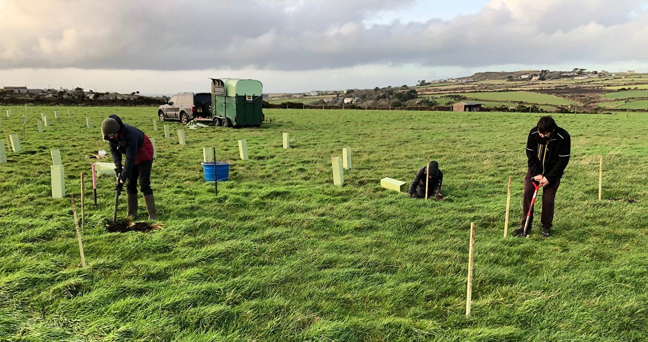 Lisas Wood  -  Cornwall  -  Volunteers Planting Trees