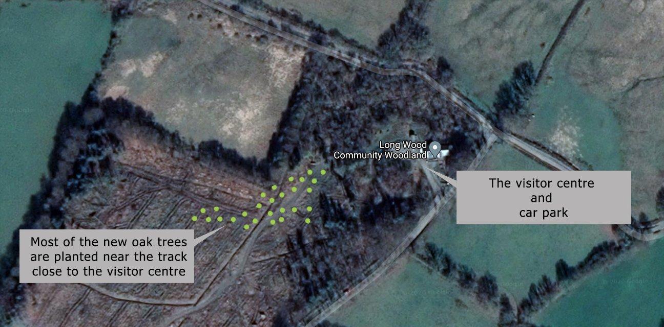 Long Wood Community Woodland  -  Wales  -  Tree Planting Map
