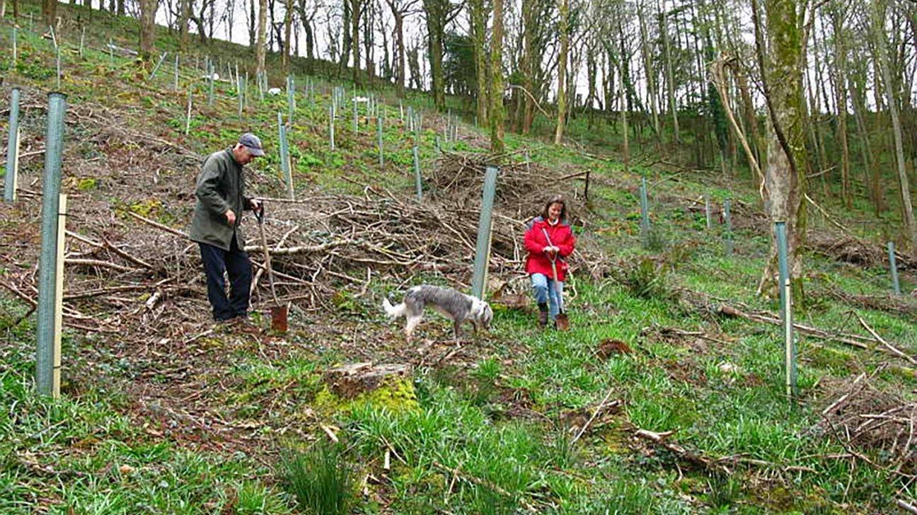 Maker Heights  -  Cornwall  -  Oak Tree Planting 2008