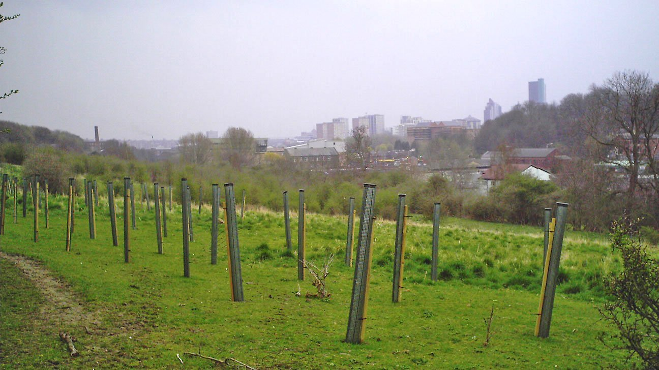 Meanwood Valley Urban Farm  -  Yorkshire  -  Newly Planted Trees In Shelters