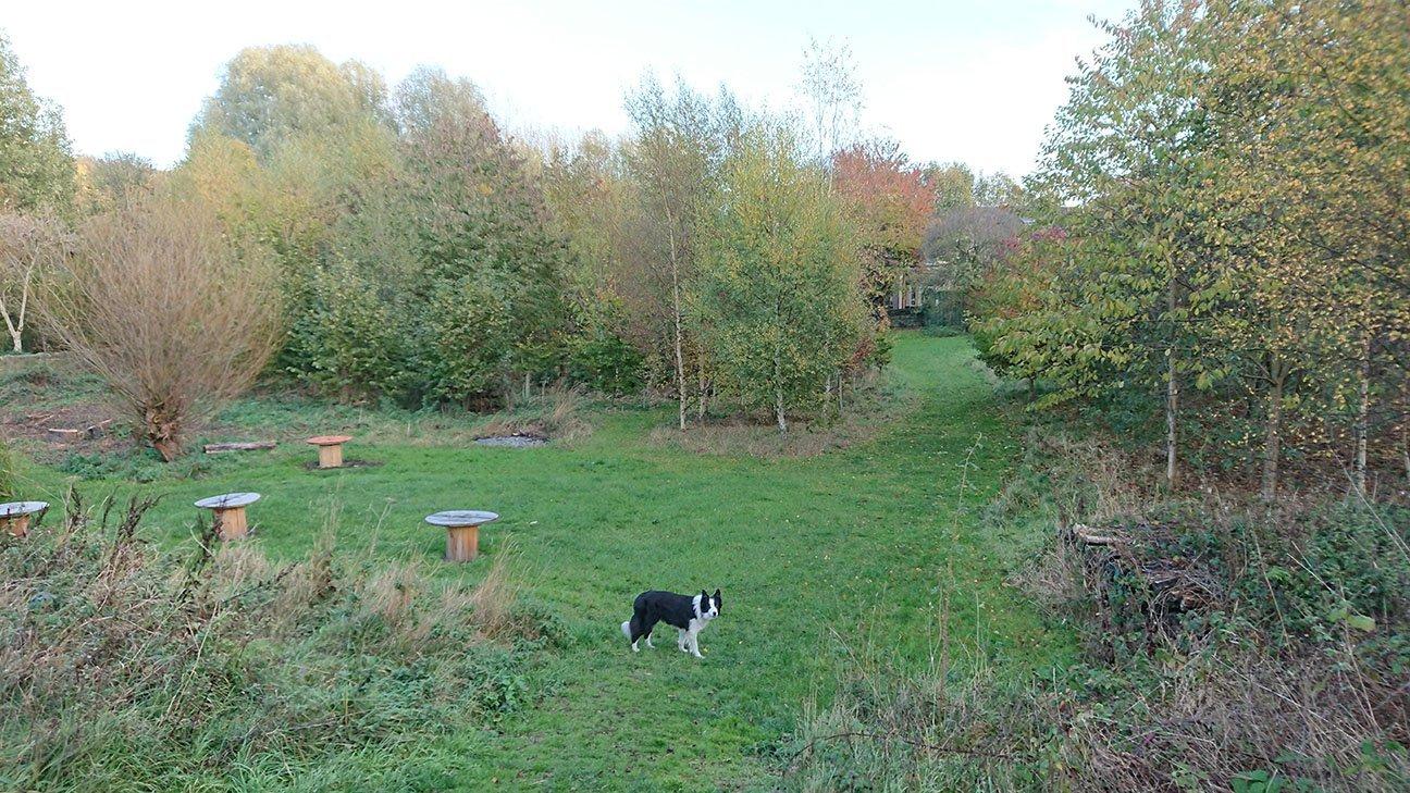 Meanwood Valley Urban Farm  -  Yorkshire  -  Tree Progress 2018