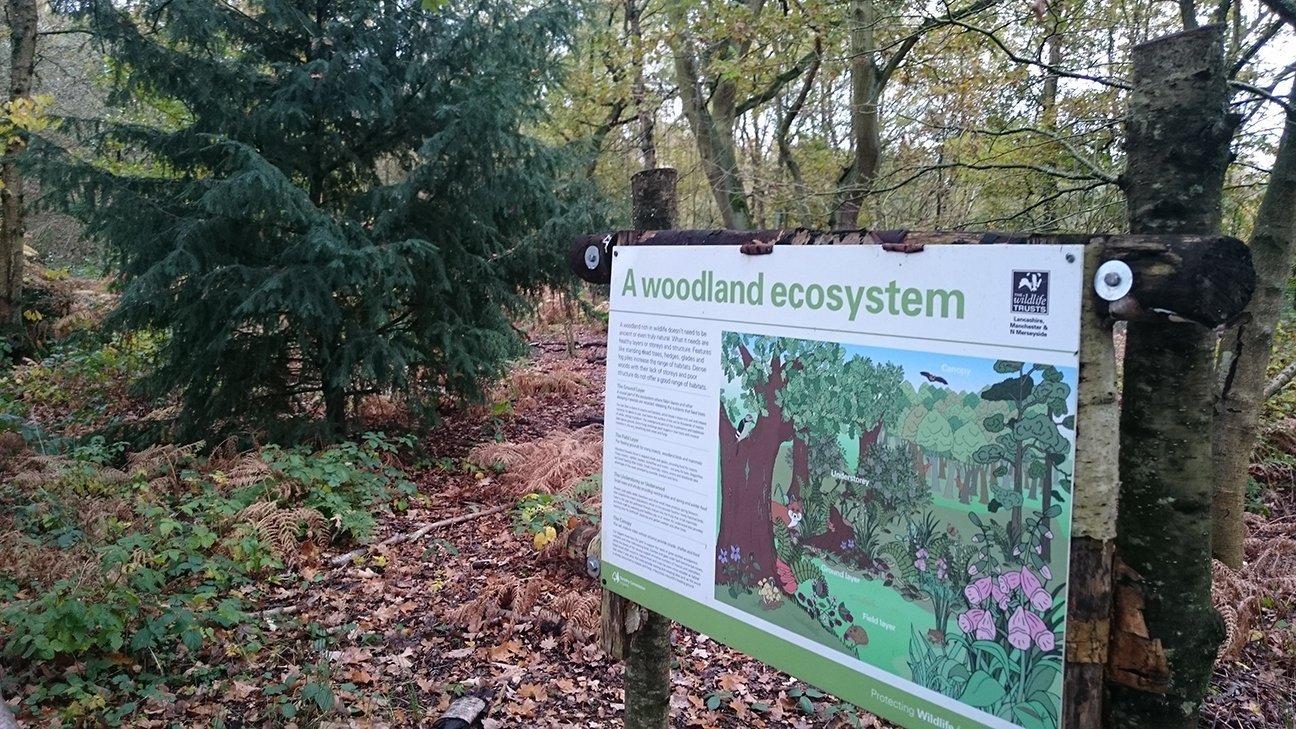 Mere Sands Wood  -  Lancashire  -  A Woodland Ecosystem