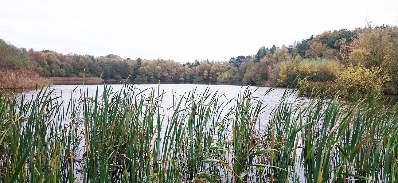 Mere Sands Wood  -  Lancashire  -  Wetlands