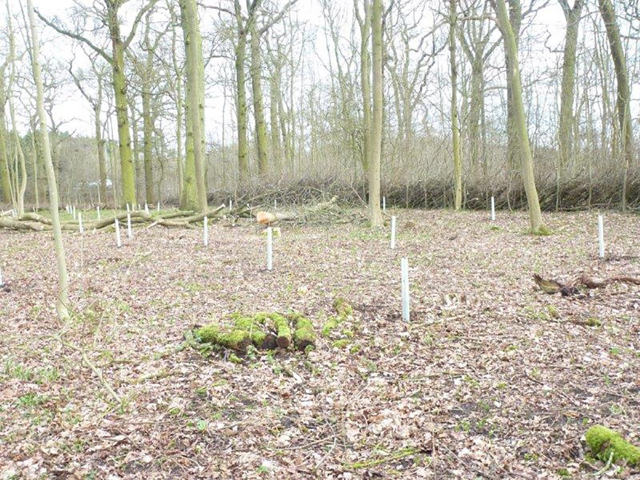 Nene Valley Park  -  Lincolnshire  -  Trees Planted In Shelters 2017