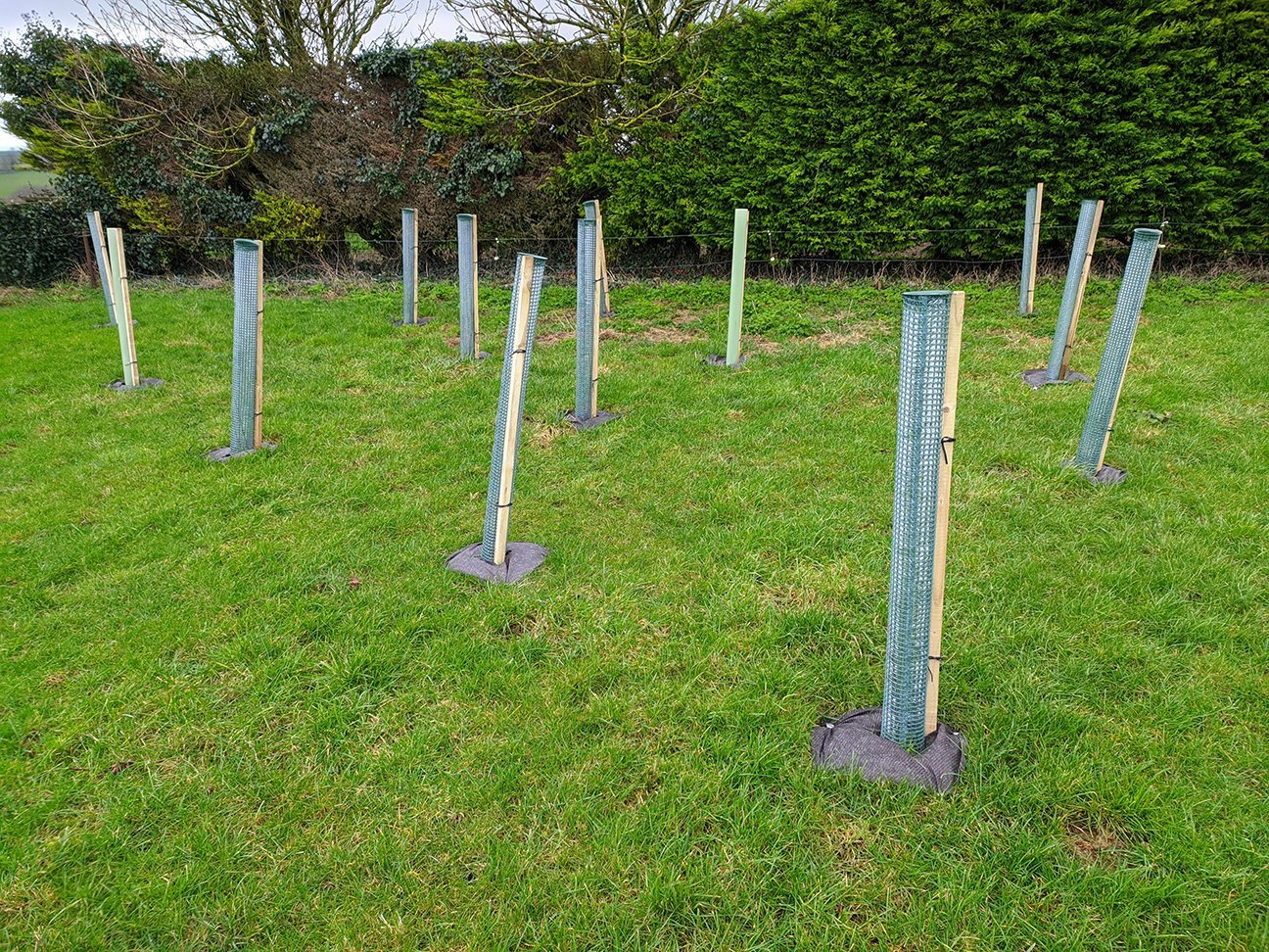 One Acre Wood  -  Dorset  -  Newly Planted Trees Are In Tree Shelters To Protect Them From Local Deer