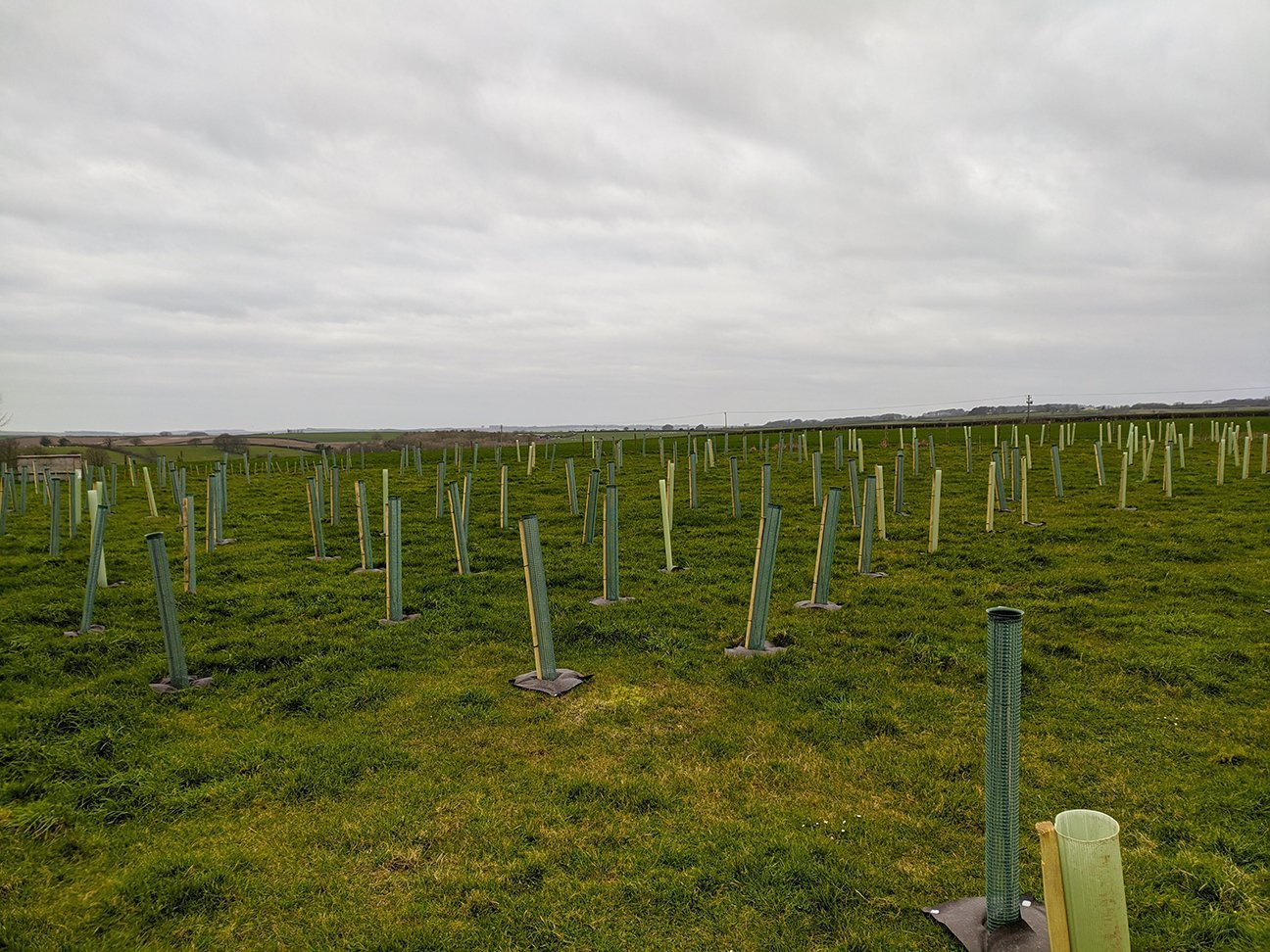 One Acre Wood  -  Dorset  -  Newly Planted Trees In Shelters 2021