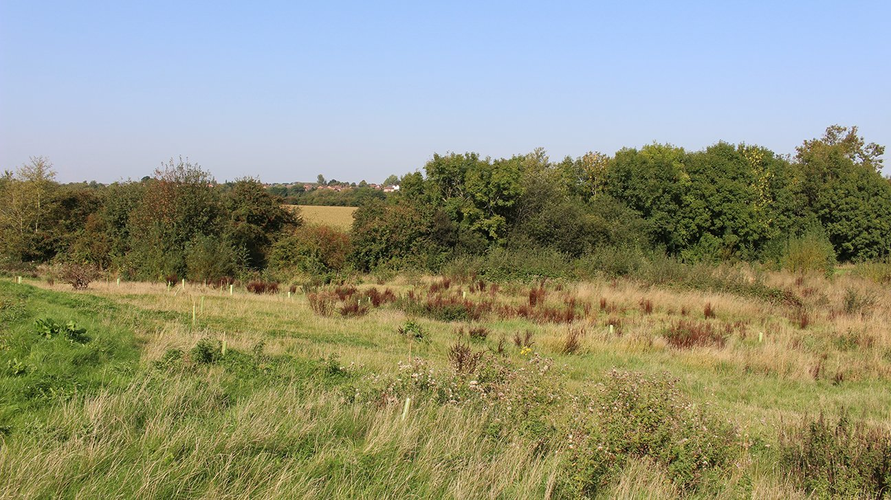 Redwings Fields  -  Shropshire  -  Is A New 4 Acre Community Woodland In Shrewsbury