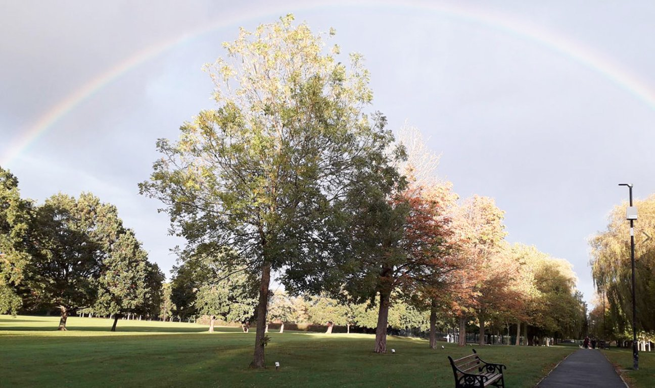 Silver Jubliee Wood  -  Essex  -  Rainbow Over Mature Trees