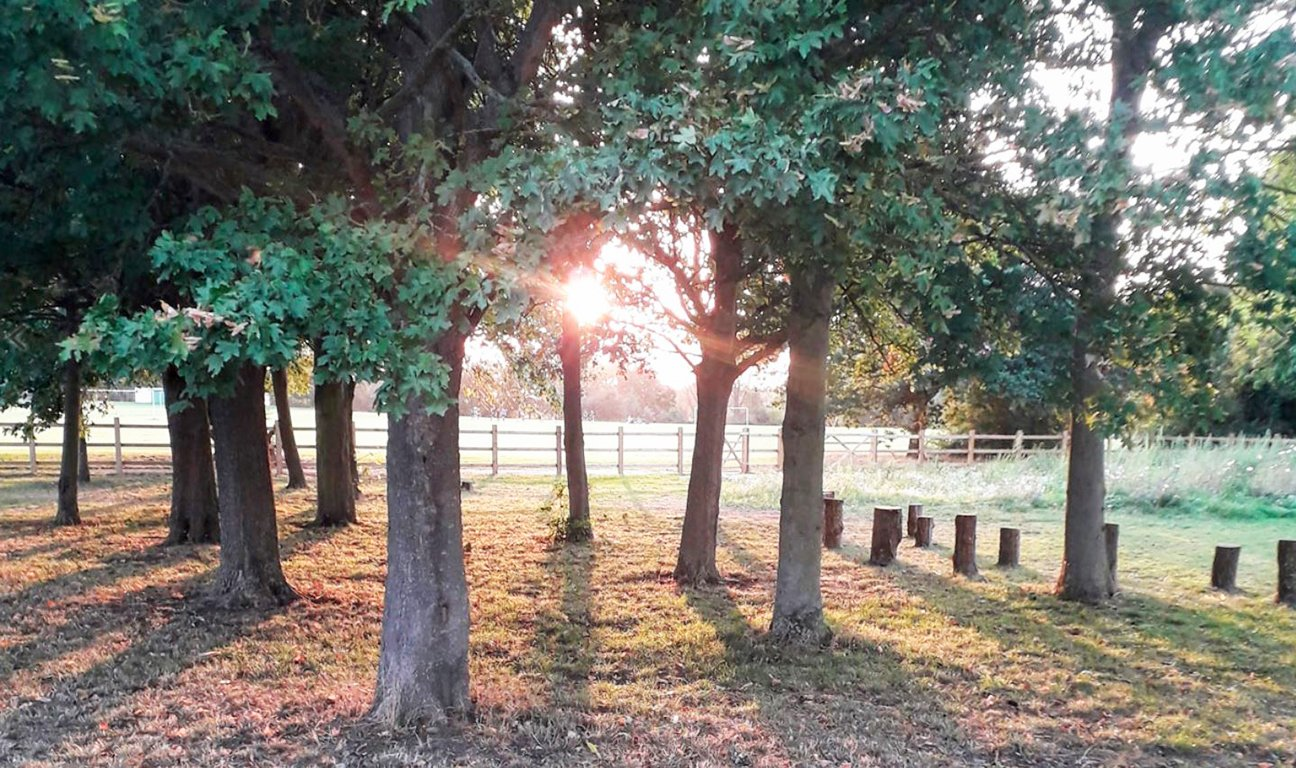 Silver Jubliee Wood  -  Essex  -  Sun Shining Through Mature Trees