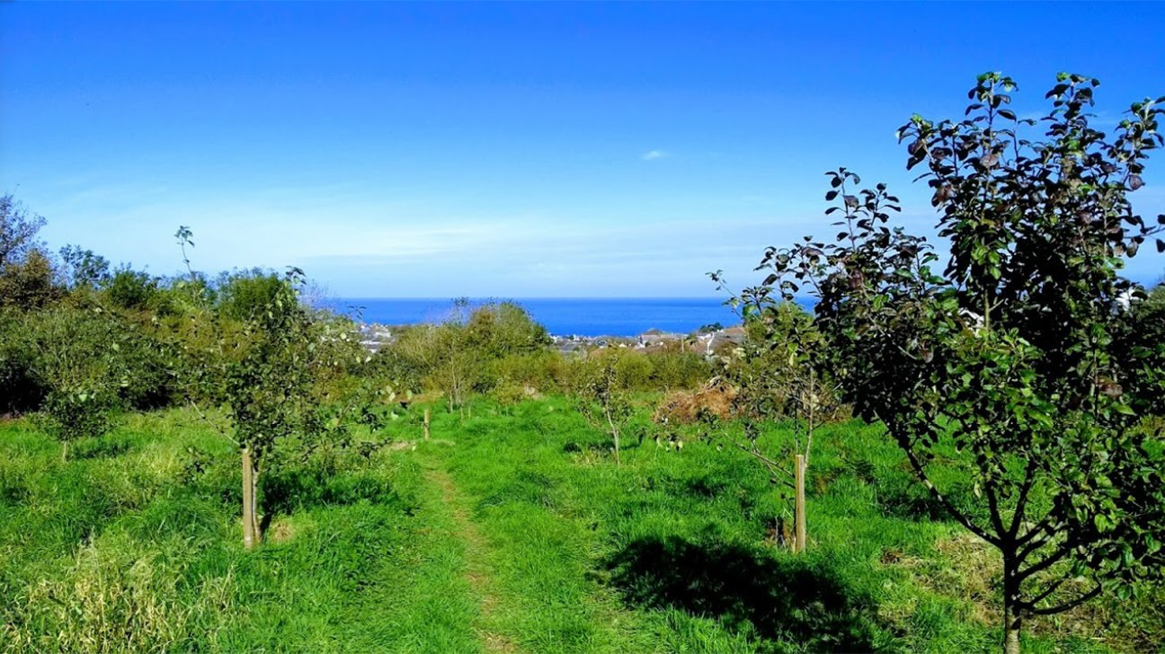 St Ives Community Orchard  -  Cornwall  -  Has Far Reaching Views Across Carbis Bay And St Ives