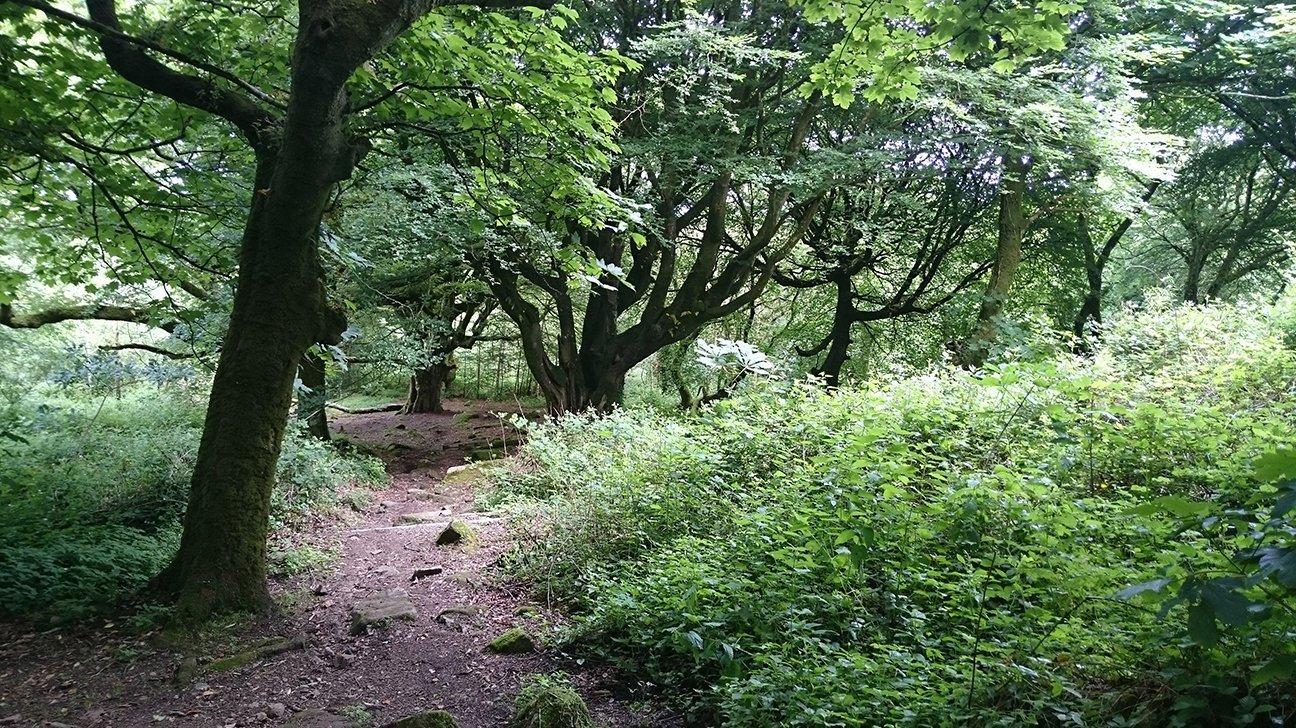 Steeple Woodland  -  Cornwall  -  Ancient Trees