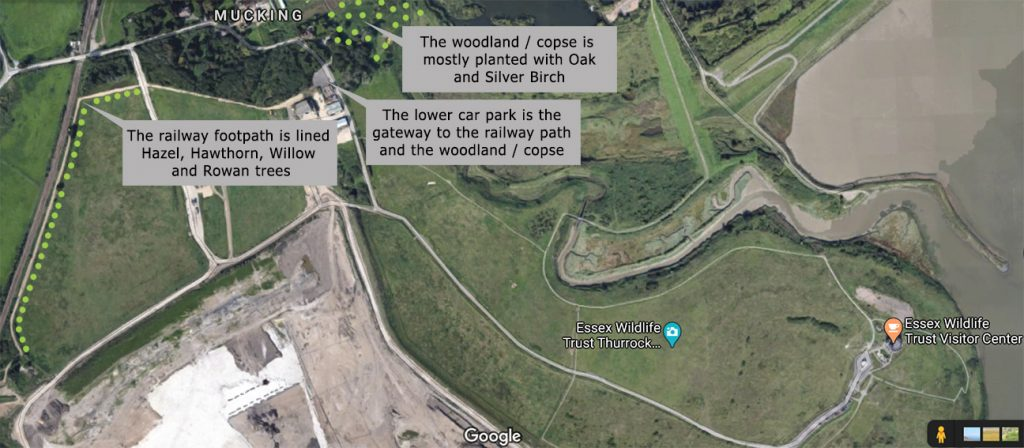 Thameside Nature Park  -  Essex  -  Tree Planting Map 2020