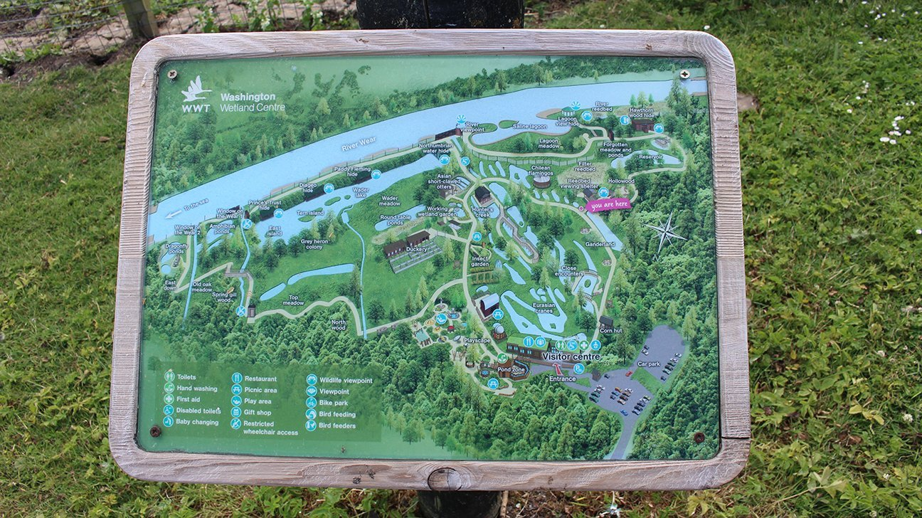 Washington Wetland Centre  -  Tyne And Wear  -  Information Board And Map