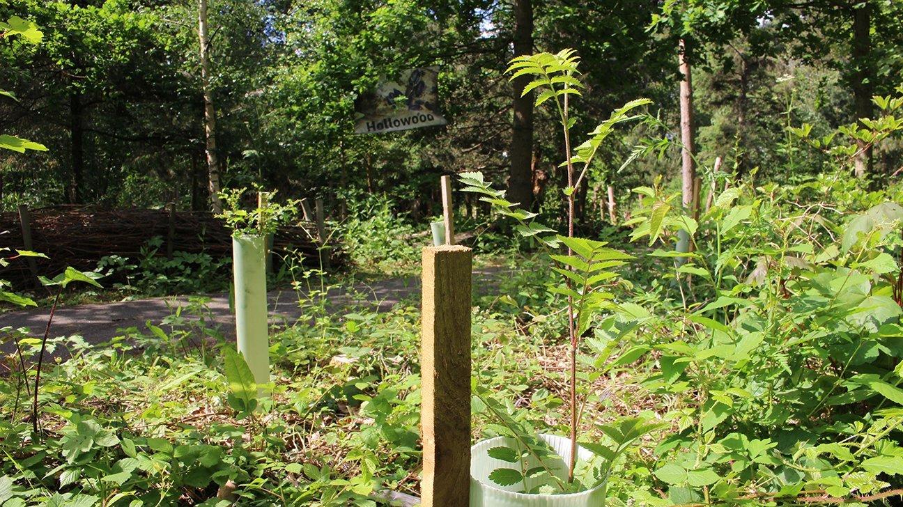 Washington Wetland Centre  -  Tyne And Wear  -  Rowan Tree In Shelter