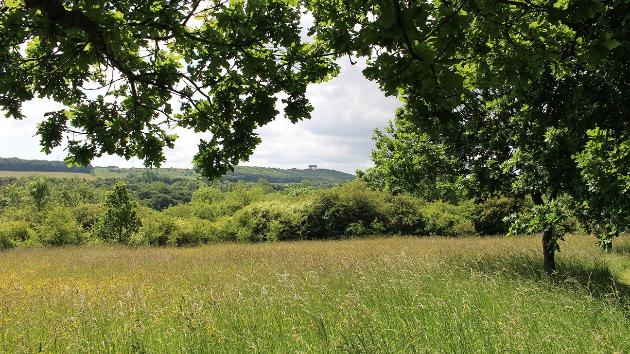 Washington Wetland Centre  -  Tyne And Wear  -  Woodland Meadow With Views To Penshaw Monument