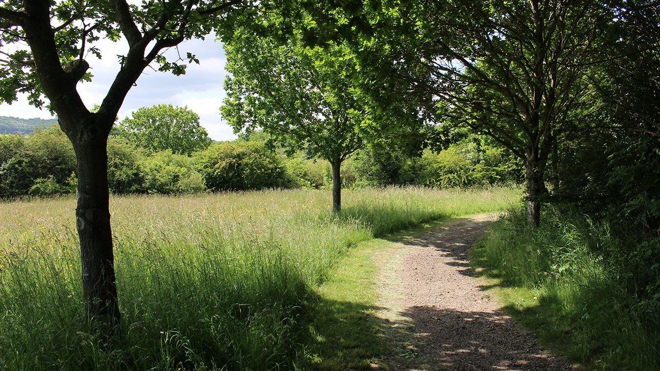 Washington Wetland Centre  -  Tyne And Wear  -  Woodland Path