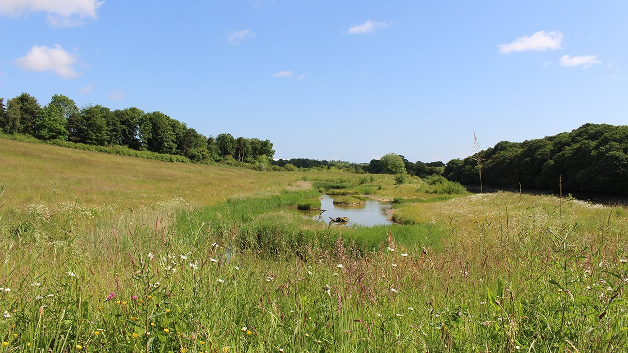 Washington Wetland Centre  -  Tyne And Wear  -  Lies On The Banks Of The River Wear
