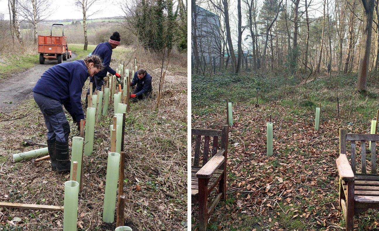 Washington Wetland Centre  -  Tyne And Wear  -  Tree Planting 2021